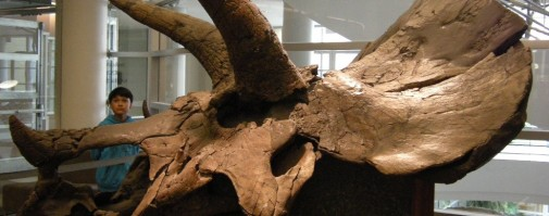 A scholar stands next to the Triceratops cast in the Valley Life Sciences Building at UC Berkeley