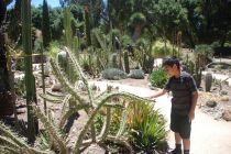 Curious young mind looking at the different type of cactus found in the Cactus Garden at Stanford.
