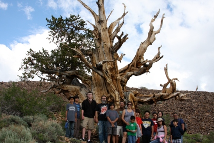 DaVinci Camp stands next to a patriarch tree found at the Ancient Bristlecone Pine Forest, in the Inyo National Park.