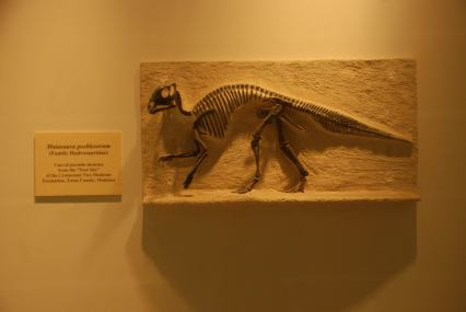 """Cast of a """"Maiasaura peeblesorum"""" from the Cretaceous period found in the VLSB at UC Berkeley."""
